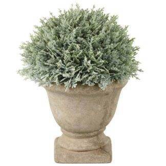 Potted Cypress Planter